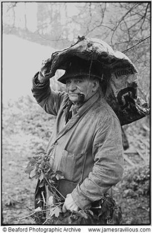 archie parkhouse with ivy for sheep, millhams dolton, Devon, England 1975