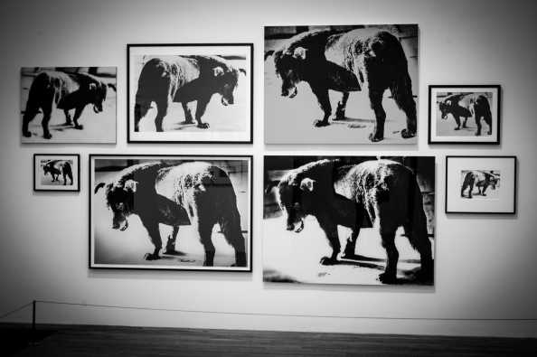 Memories of a dog Daido Moriyama Tate Modern December 2012