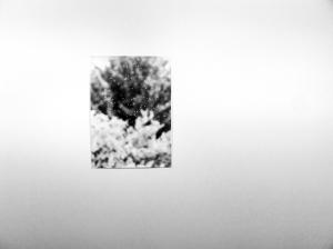 Jochen Lempert Deutsche Borse Prize Installation Photographers Gallery London